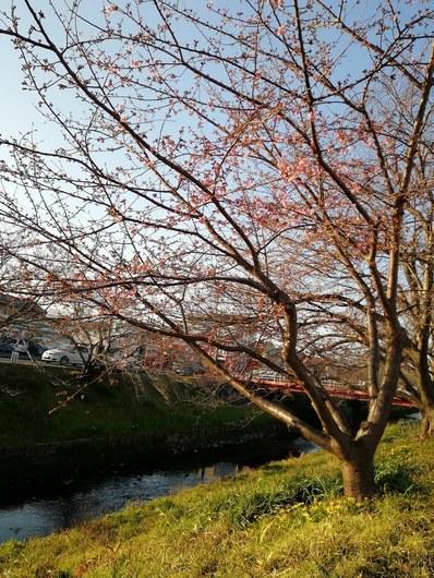 f:id:yumemizuki3vision:20190217221609j:plain