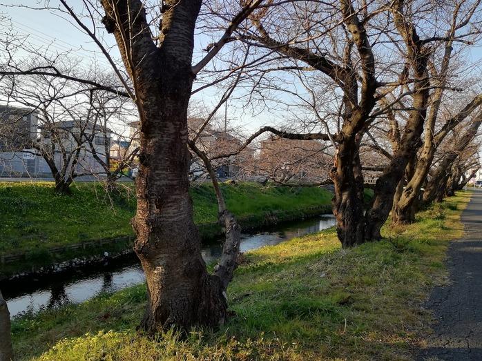 f:id:yumemizuki3vision:20190217221614j:plain