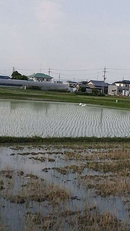 f:id:yumemizuki3vision:20210611010233j:plain