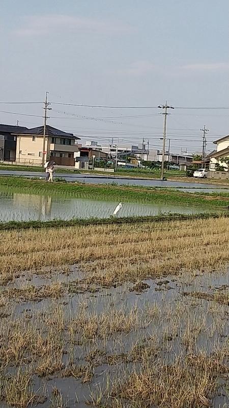 f:id:yumemizuki3vision:20210611010239j:plain