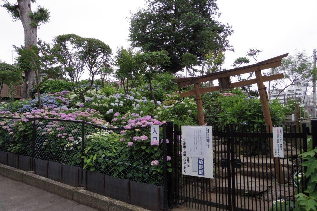 f:id:yumenoko:20210529205149j:plain