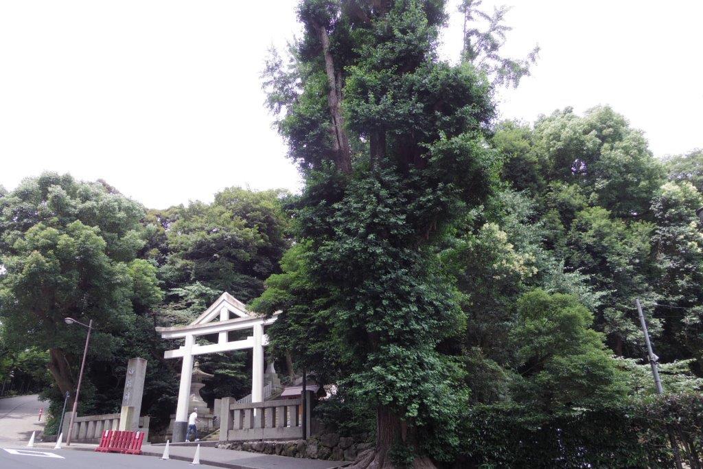 f:id:yumenoko:20210626200458j:plain