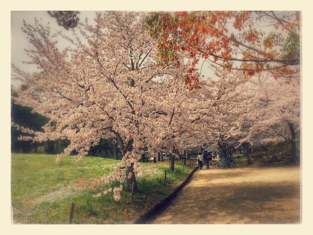f:id:yumesakikomachi:20170410124042j:image