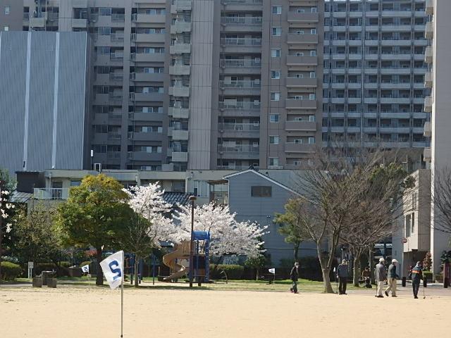 f:id:yumetagai:20200404092443j:plain