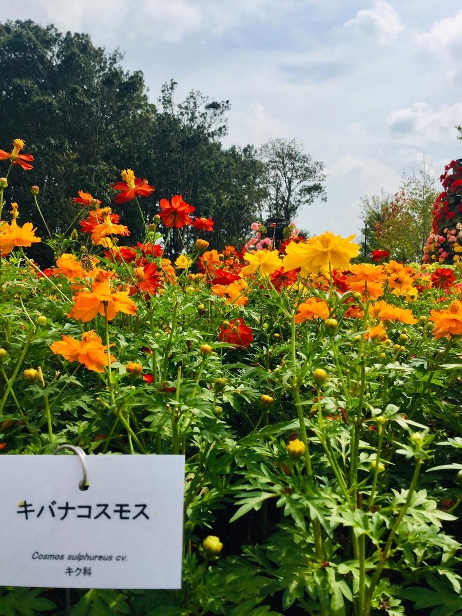 f:id:yumeusagiyukiusagi:20191007230707j:plain