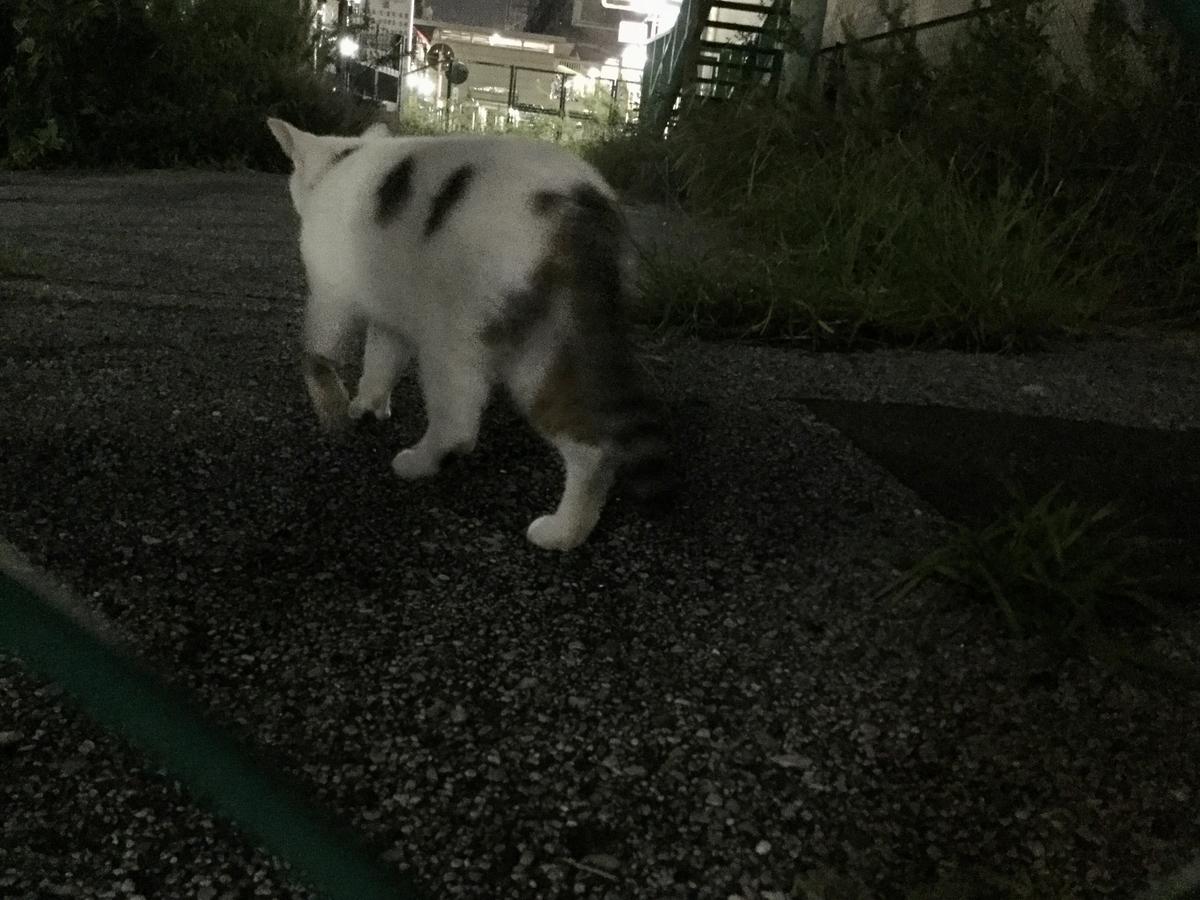 f:id:yumeusagiyukiusagi:20191015234917j:plain