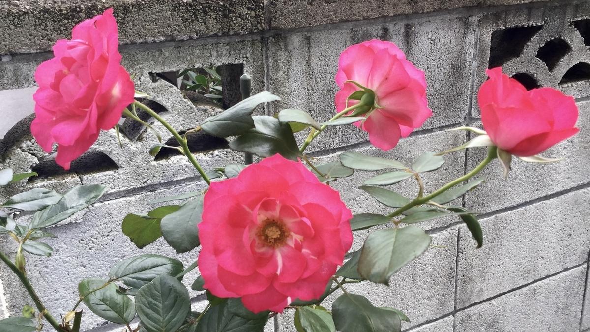 f:id:yumeusagiyukiusagi:20191024235045j:plain