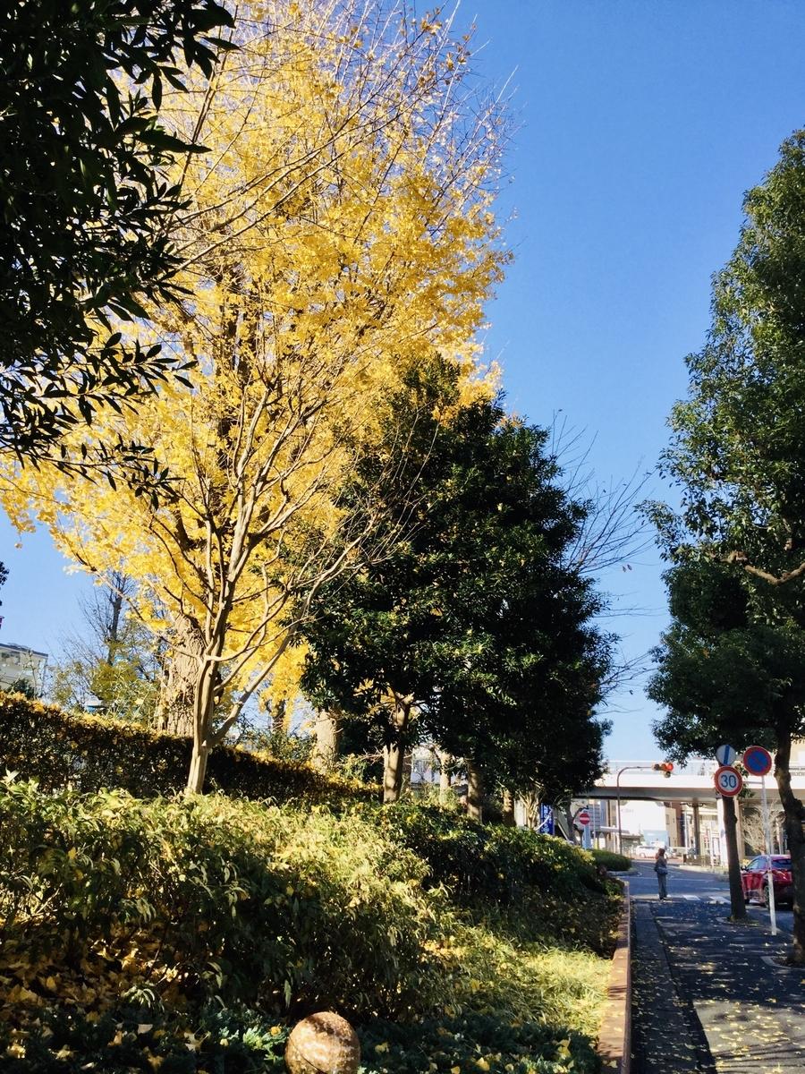 f:id:yumeusagiyukiusagi:20191213092249j:plain