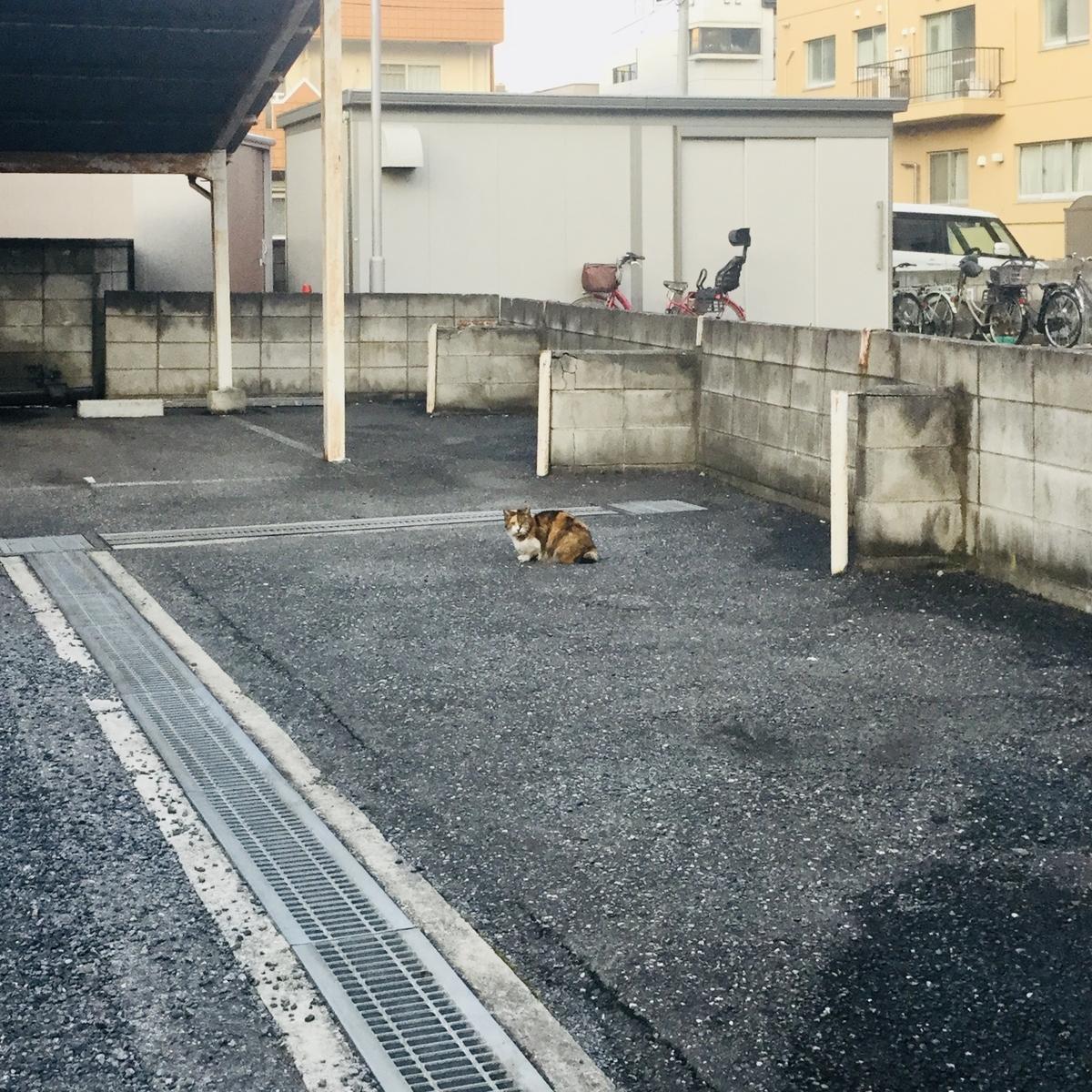 f:id:yumeusagiyukiusagi:20200214072717j:plain