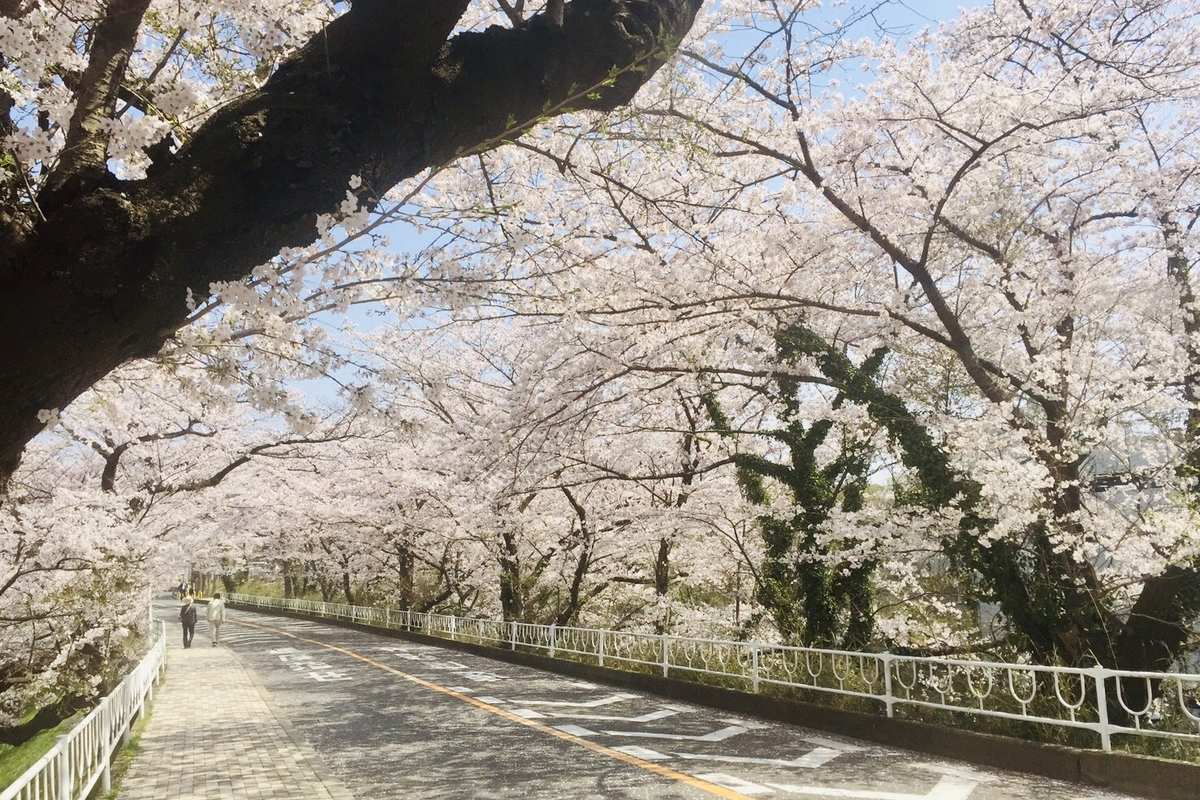 f:id:yumeusagiyukiusagi:20200520103419j:plain