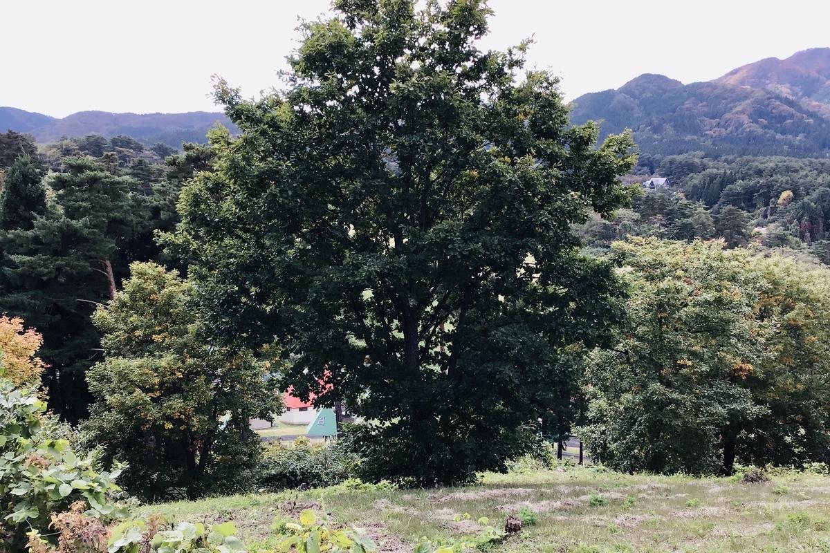 f:id:yumeusagiyukiusagi:20201025053958j:plain