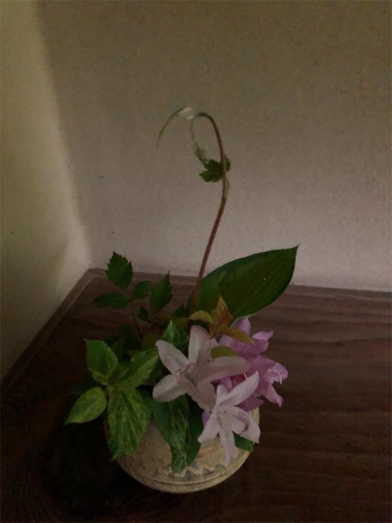 f:id:yumi-kuroda:20190502141635j:image
