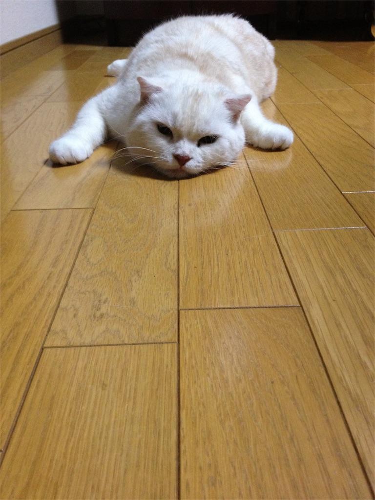 f:id:yumi458:20160809215753j:image