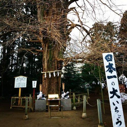 f:id:yumi98chan:20210117234553j:plain