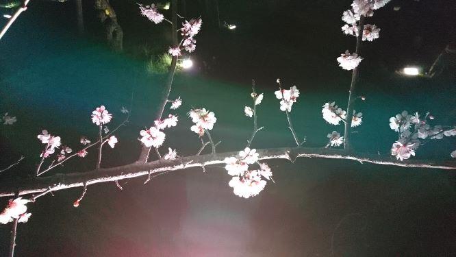 f:id:yumi98chan:20210407205148j:plain