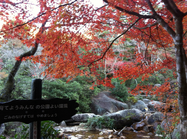 f:id:yumiichi:20141126130733j:image:w320