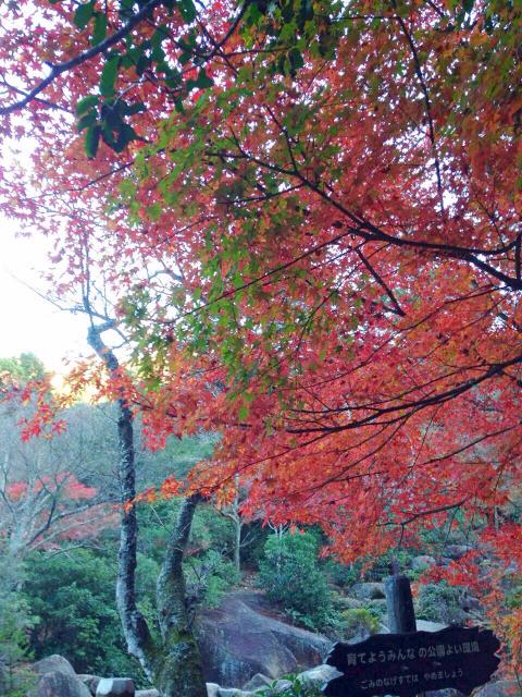 f:id:yumiichi:20141126131052j:image:h320