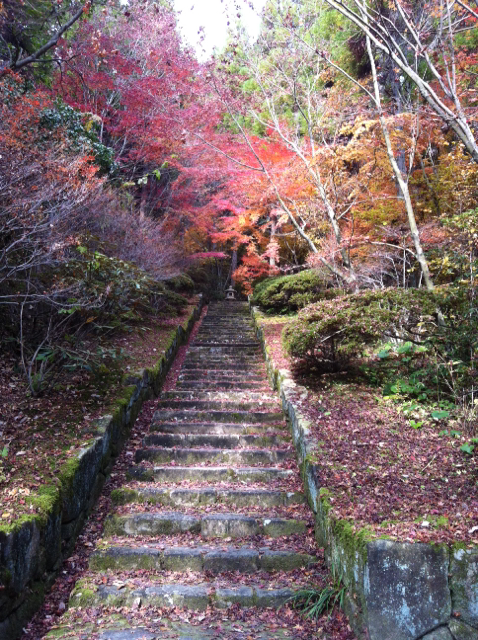 f:id:yumiichi:20141129093143j:image:h320