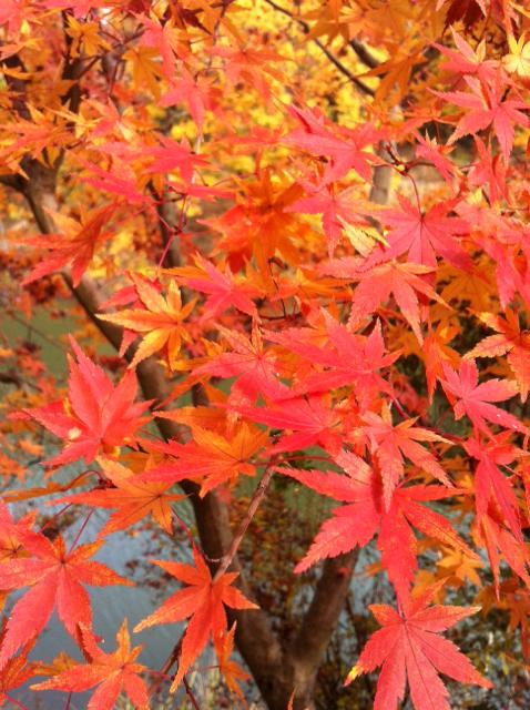 f:id:yumiichi:20141129093250j:image:h320