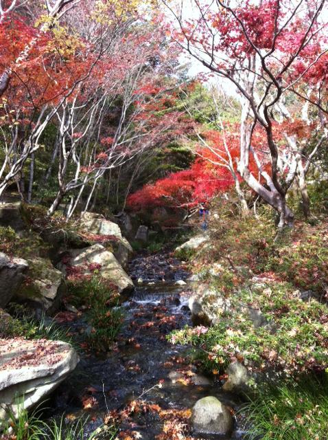 f:id:yumiichi:20141129093313j:image:h320