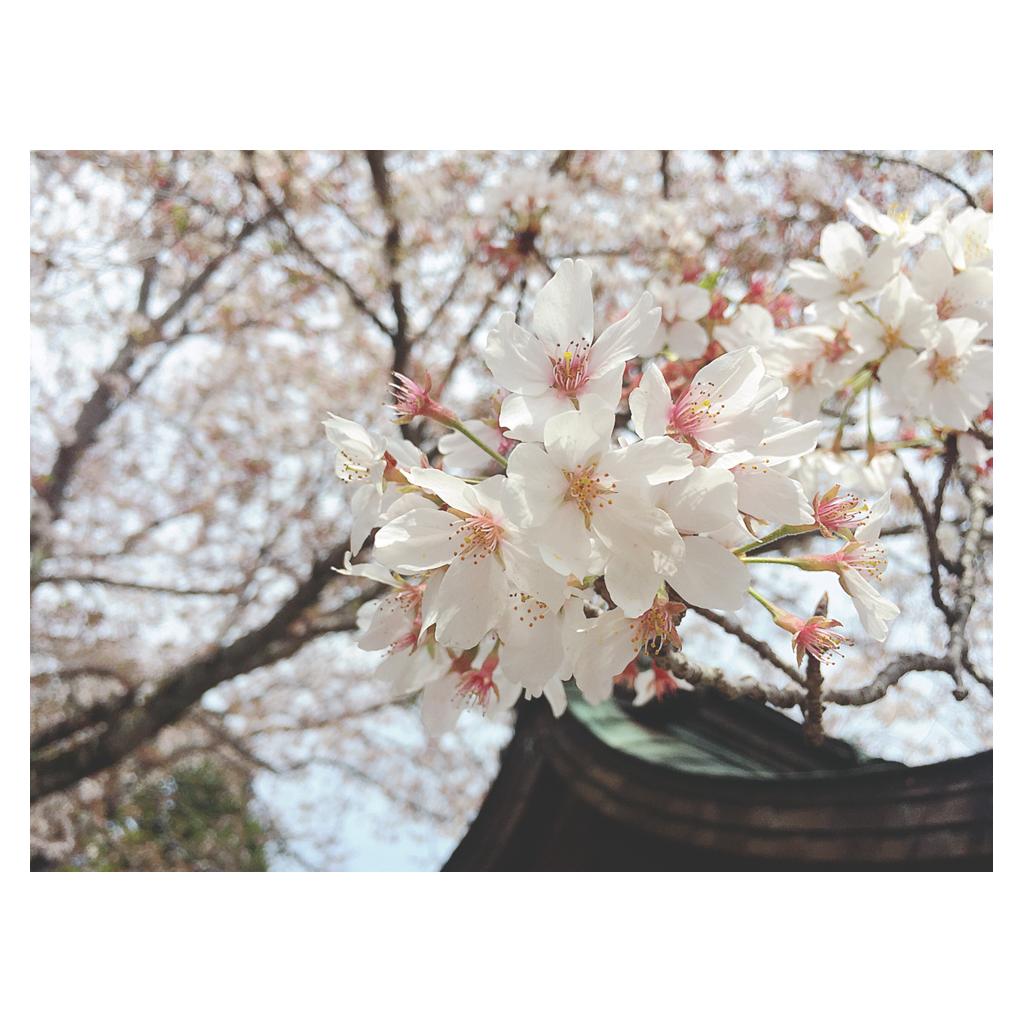 f:id:yumika_fl1020:20170418150853p:image