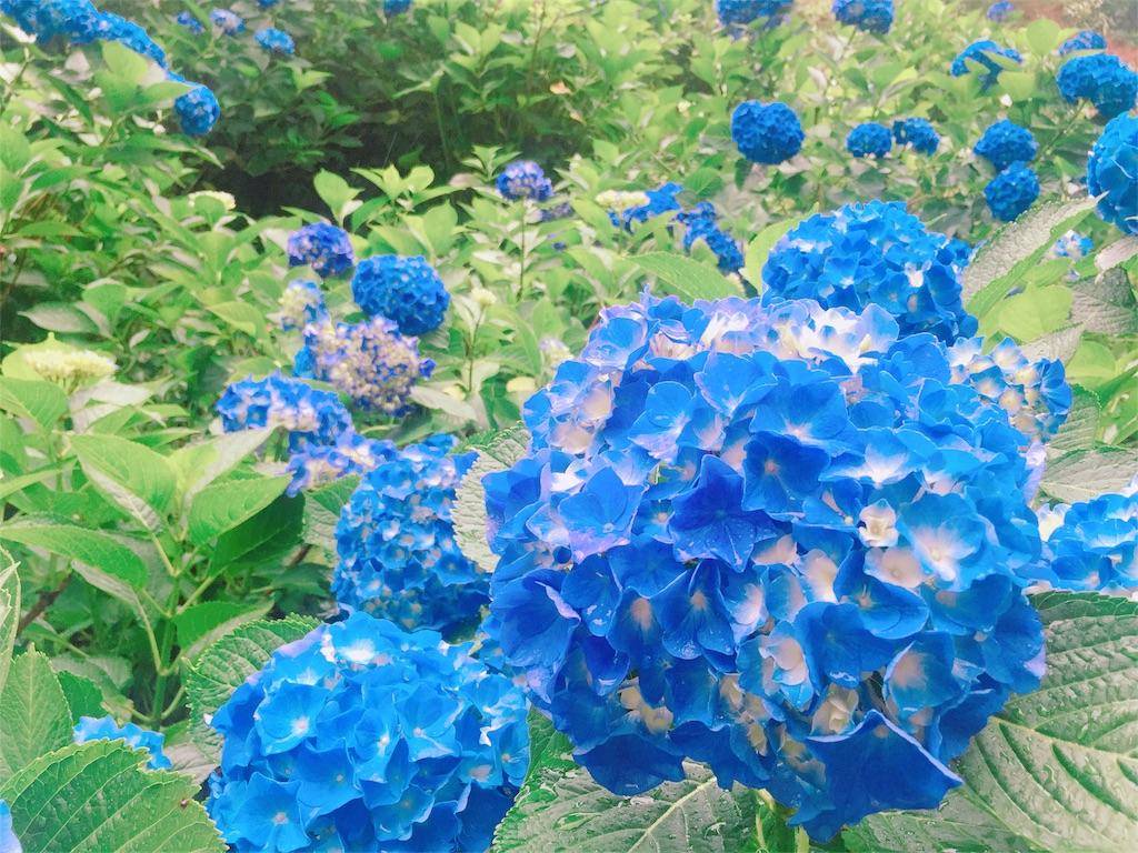 f:id:yumika_fl1020:20170712153352j:image