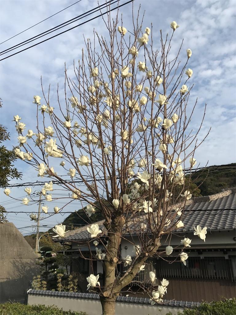 f:id:yumiko531:20170322212954j:image