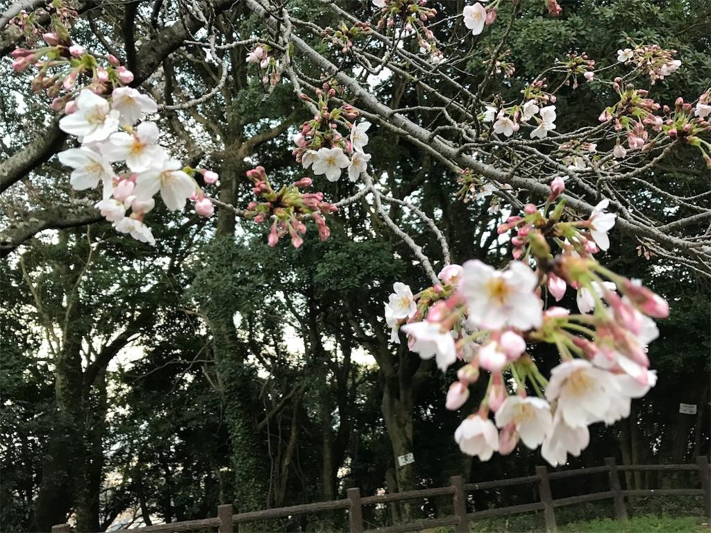 f:id:yumiko531:20170404223155j:image