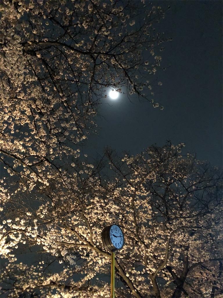 f:id:yumikoTM:20210329083540j:image