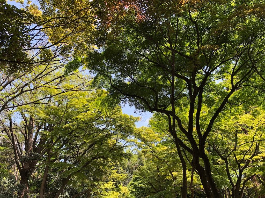 f:id:yumikoTM:20210413140622j:image