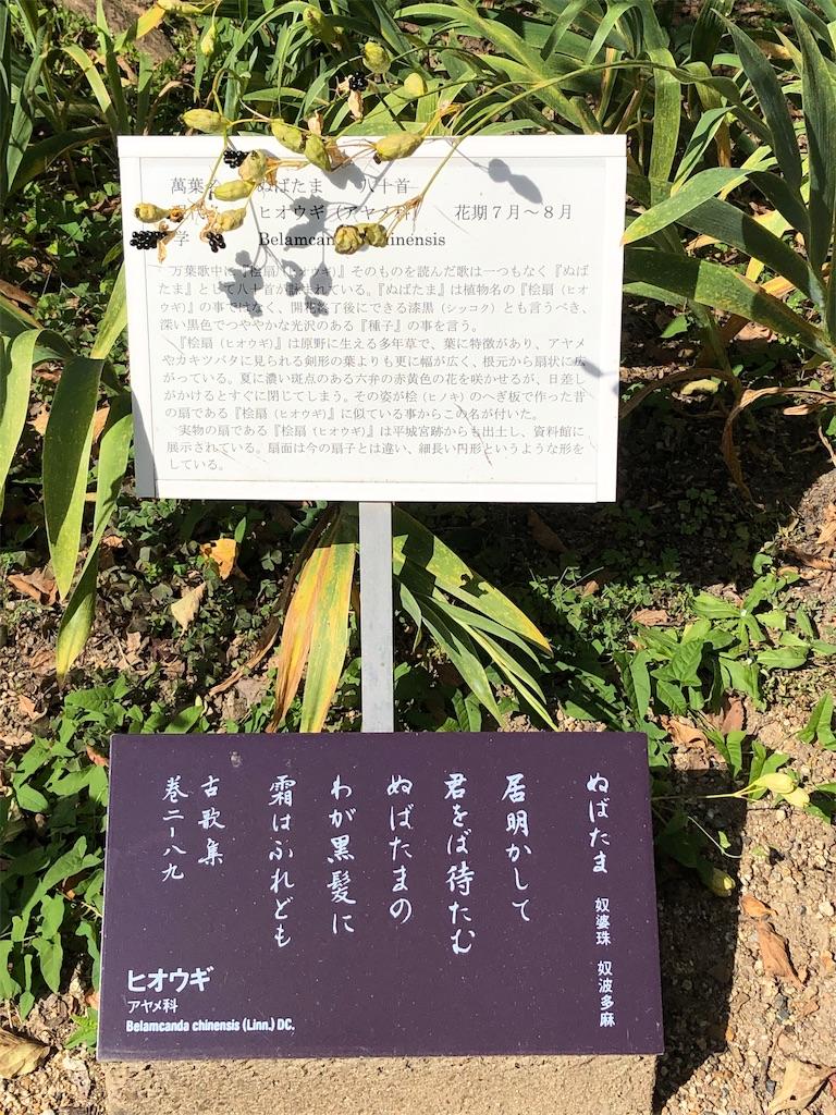f:id:yumikoTM:20211006092632j:image
