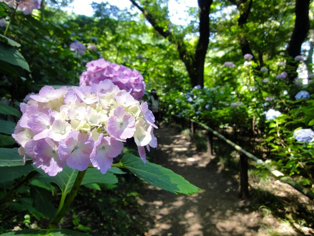f:id:yumimi-kyoto:20160614154801j:plain