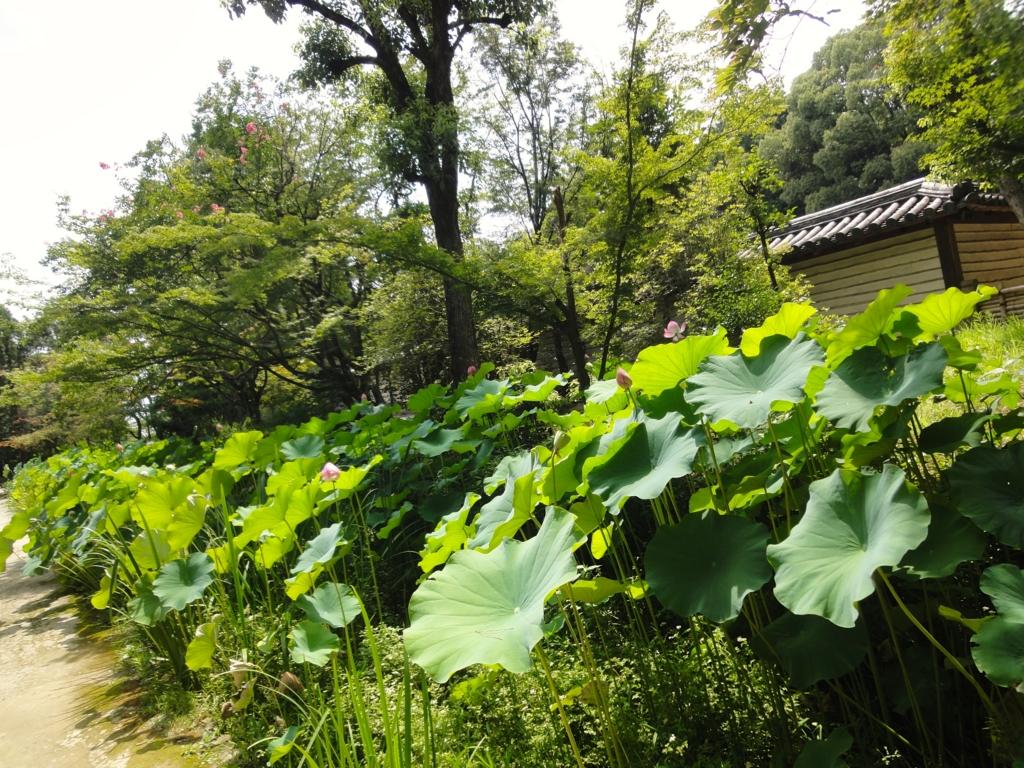 f:id:yumimi-kyoto:20160805141754j:plain