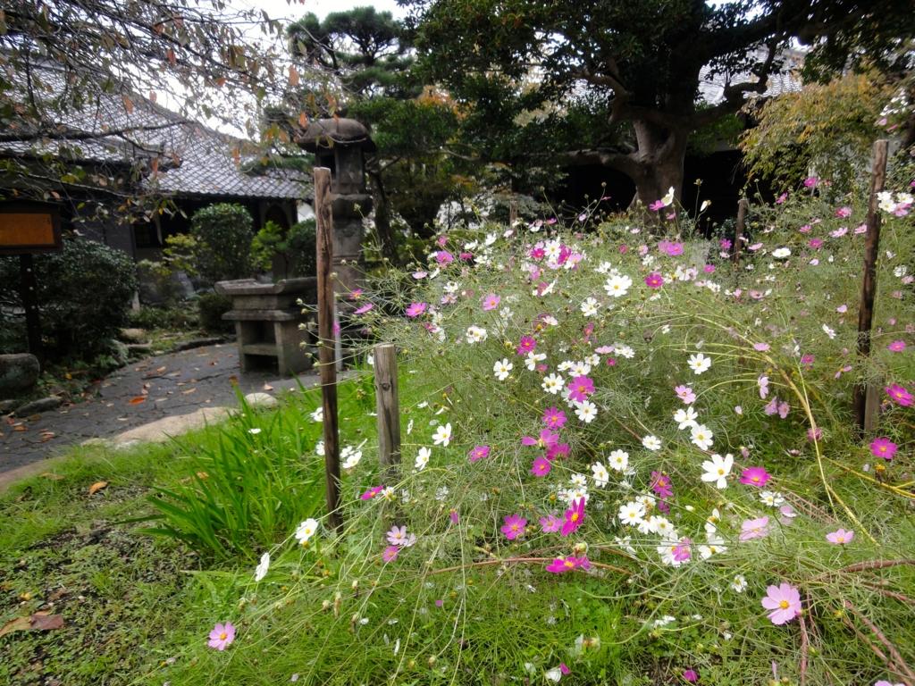 f:id:yumimi-kyoto:20161105112739j:plain