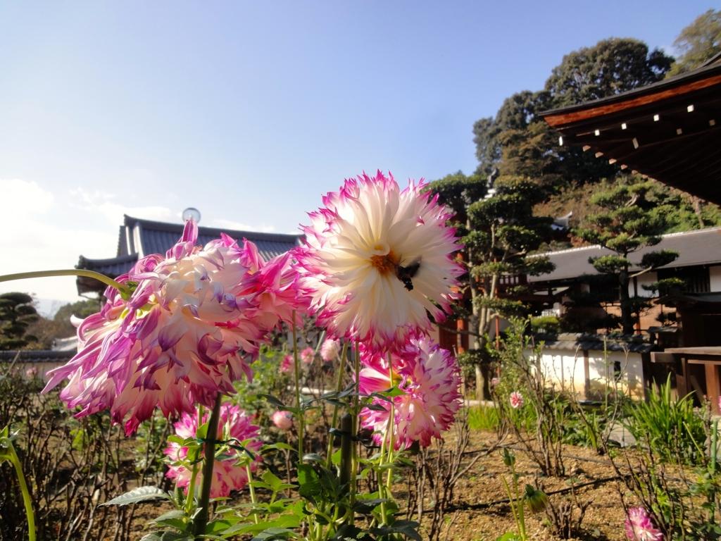 f:id:yumimi-kyoto:20161114134019j:plain