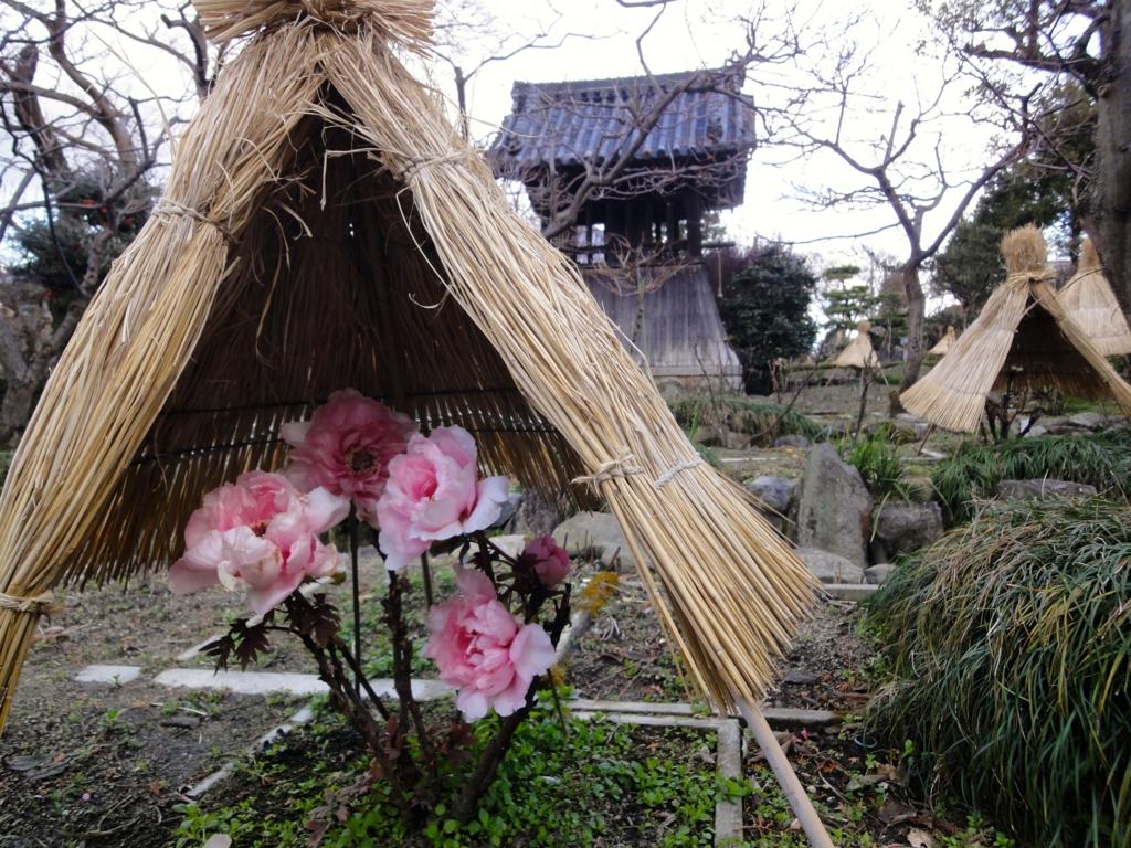 f:id:yumimi-kyoto:20170126162027j:plain