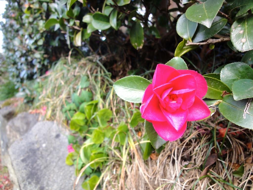 f:id:yumimi-kyoto:20170126162321j:plain