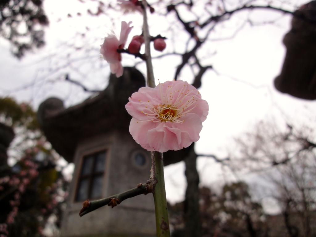 f:id:yumimi-kyoto:20170224164815j:plain