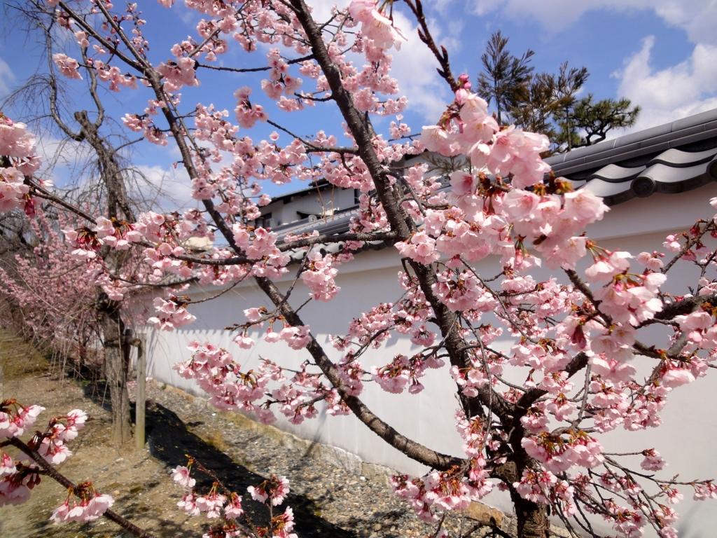 f:id:yumimi-kyoto:20170326030623j:plain