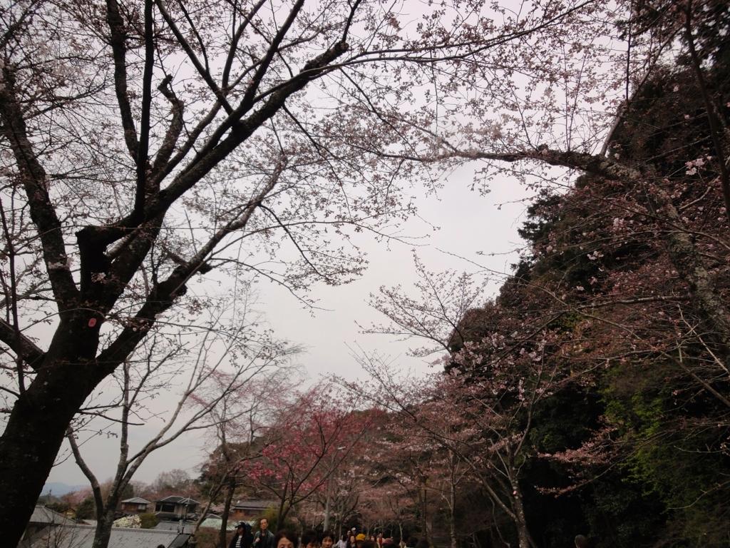 f:id:yumimi-kyoto:20170407134724j:plain