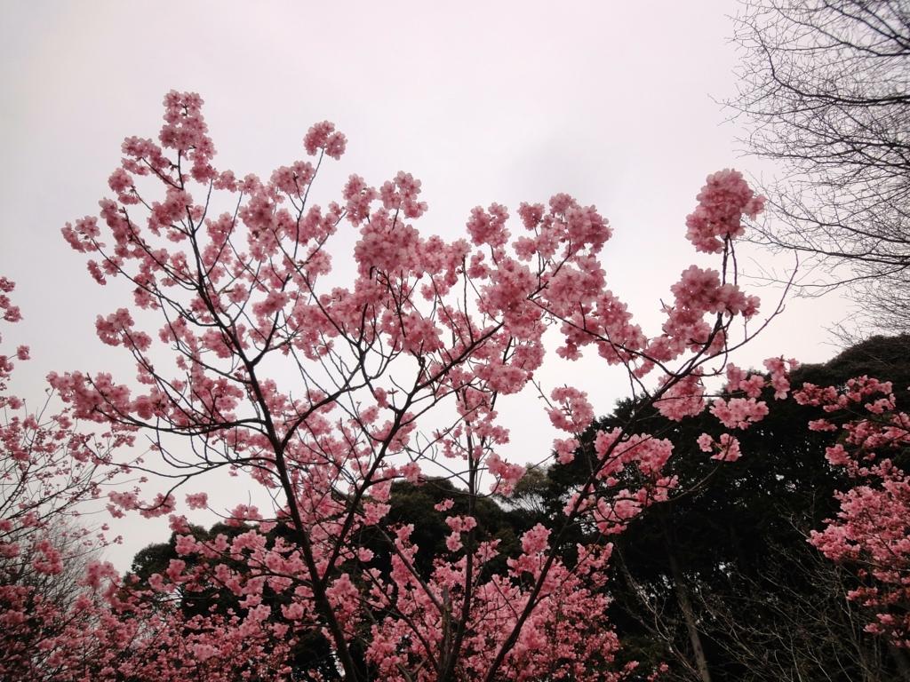 f:id:yumimi-kyoto:20170407153341j:plain