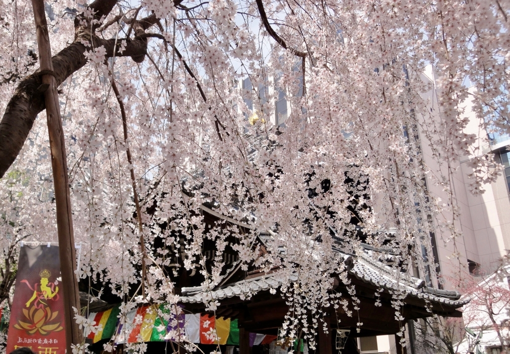 f:id:yumimi-kyoto:20180330110448j:plain