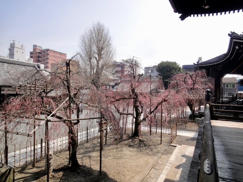 f:id:yumimi-kyoto:20180330150732j:plain