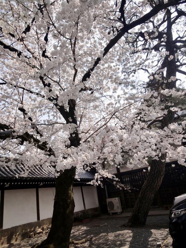 f:id:yumimi-kyoto:20180330150820j:plain