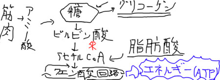 f:id:yun__yun:20090124013901j:image