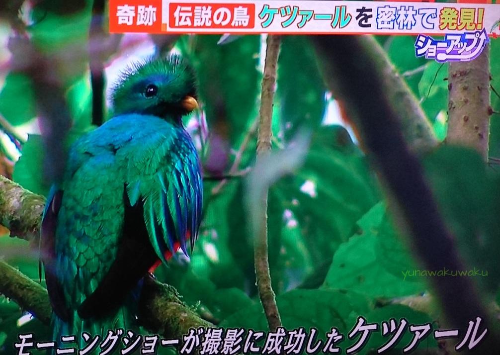 f:id:yunawakuwaku:20170101110628j:plain