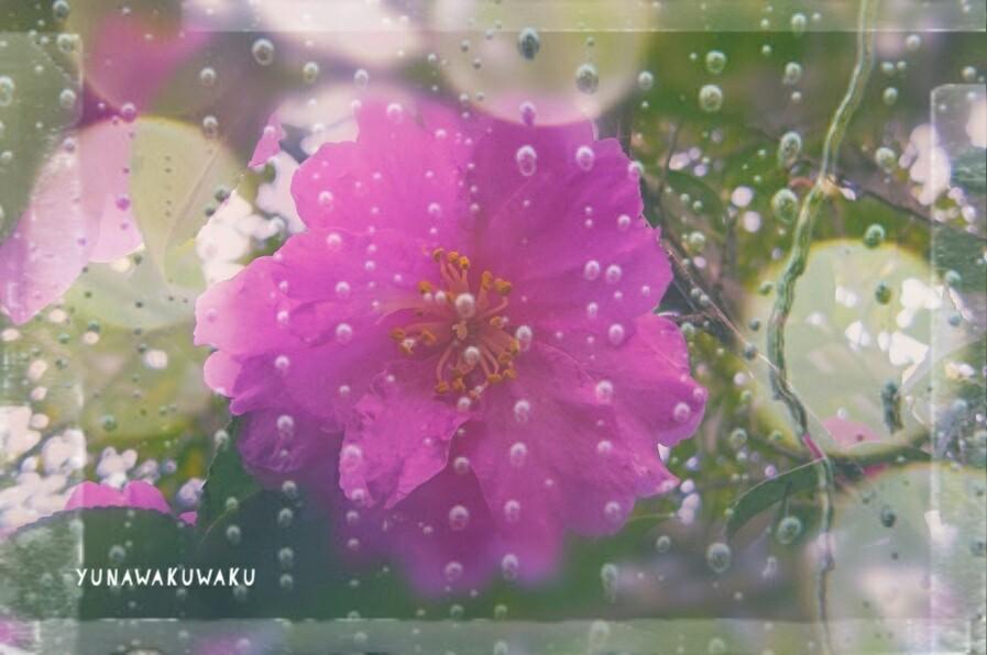 f:id:yunawakuwaku:20170109224537j:plain