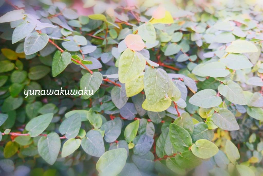 f:id:yunawakuwaku:20170110213859j:plain