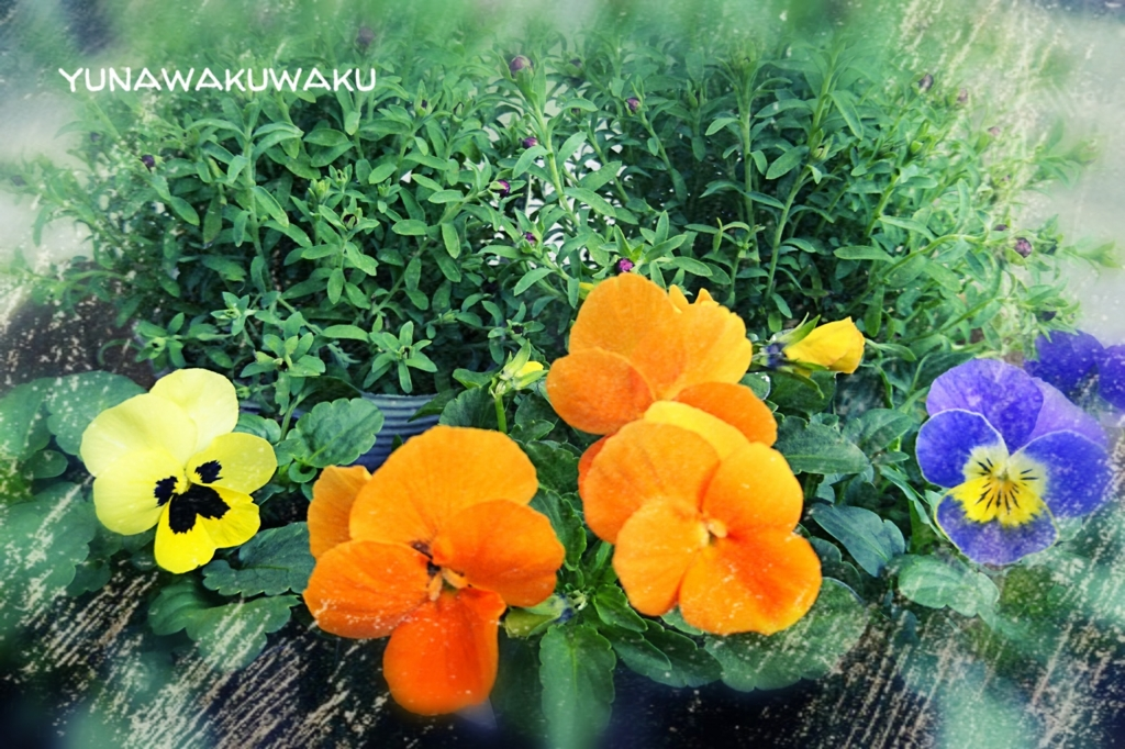 f:id:yunawakuwaku:20170127233302j:plain