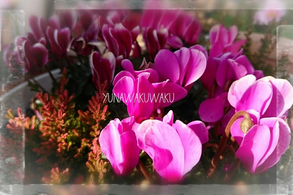 f:id:yunawakuwaku:20170131212626j:plain